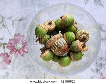 Lovely acorns in wine glass