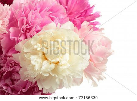 Bouquet Of Different Color Peonies