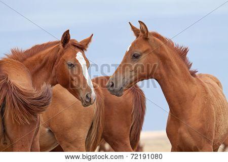 Don Horses