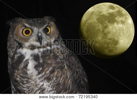 A Great Horned Owl And Moon Against Black