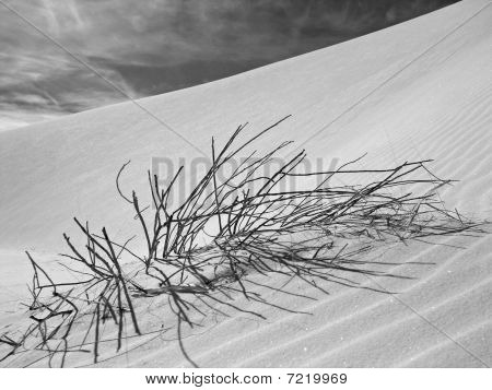 The Dunes of New Mexico