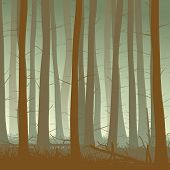 image of coniferous forest  - Vector square illustration inside misty coniferous forest with grass in green tone - JPG