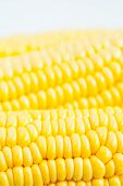 stock photo of corn-silk  - The close up grains of ripe corn - JPG