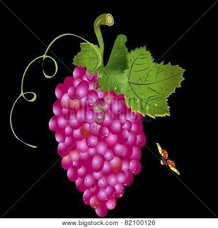 Grapes On A Vine And A Ladybug