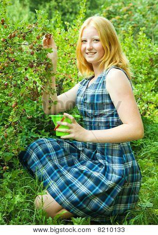 Teen Girl  Picking Gooseberry