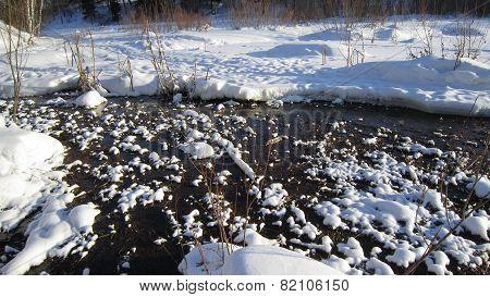 Winter swamp