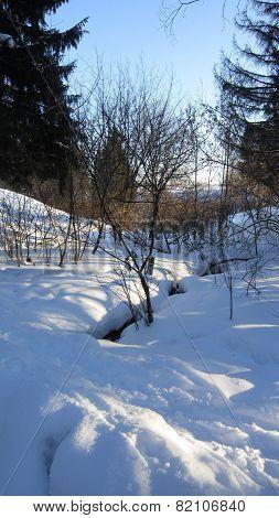 Forest winter brook