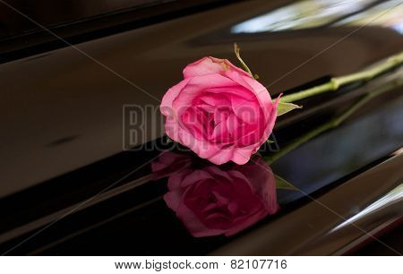 Pink Rose On Top Of Piano