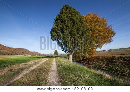 Pathway along the river with two colorful trees