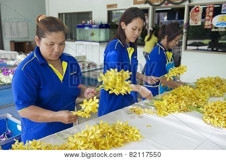 Women work at the orchid farm in Samut Songkram, Thailand.