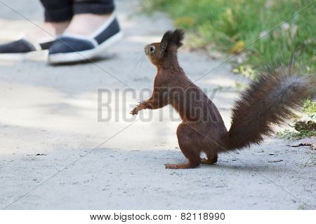 Squirrel On Road