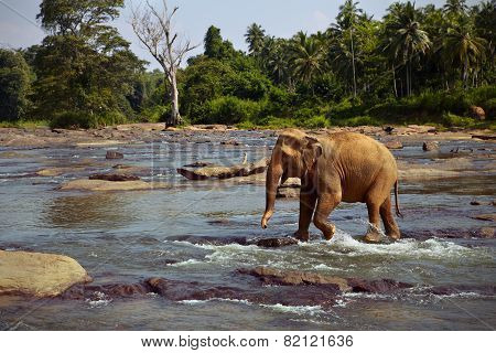 Elephant standing in the river
