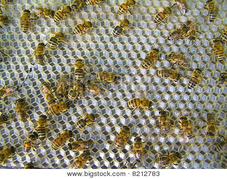Bienen Ventilatoren