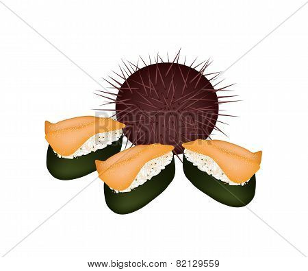 Urchin and Sea Urchin Sushi Isolated on White