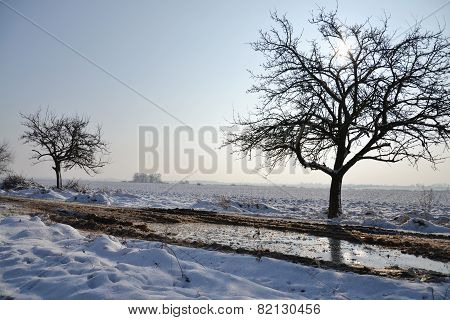 Snowy Country In A Sunny Winter Day
