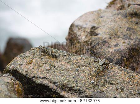 Crab And Fish, La Digue, Seychelles