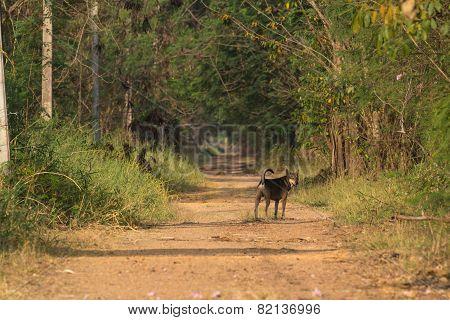 Dog at Country road