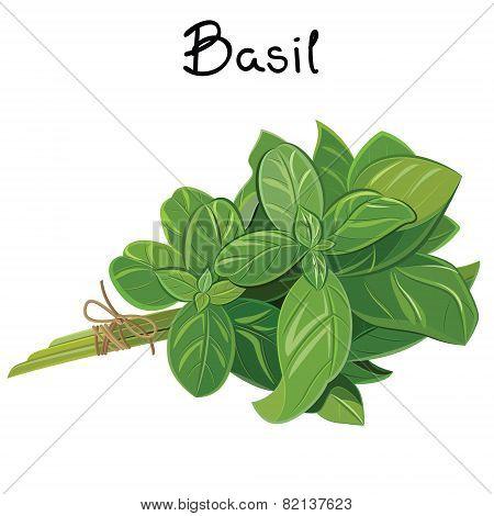 Basil Sprig