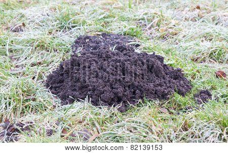 Molehill- Lawn