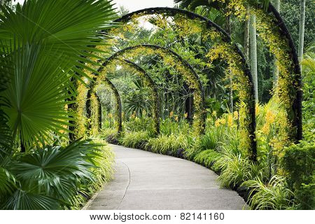 Botanical Garden Path