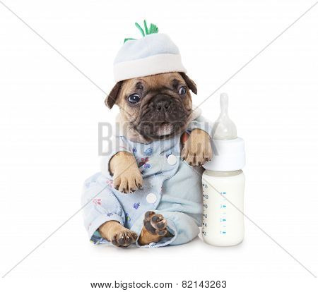 French Bulldog Puppy With A Bottle Of Milk