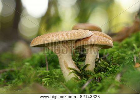 Unidentified Orange Mushrooms