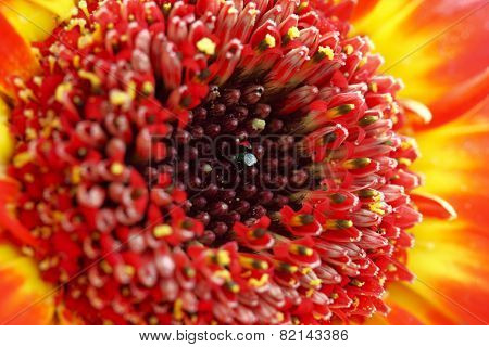 Flower With Red Blossom