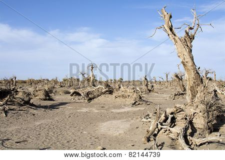 Dead Trees In The Desert, Ejina, Inner Mongolia, China