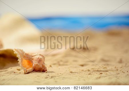 Sea concept composition with sea shell