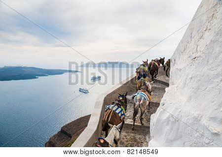 Horses And Donkeys Walking On The Road Along The Sea