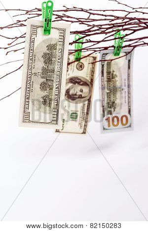 tree with paper money
