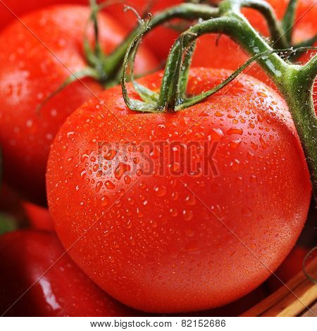 Tomatoes In The Basket