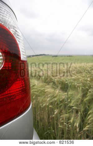 rear light in cornfield - portrait