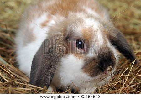 Rabbit On Hay