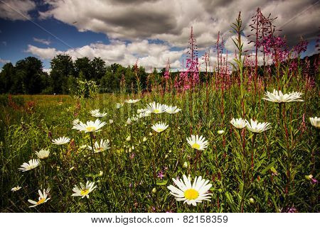 Sally-bloom field