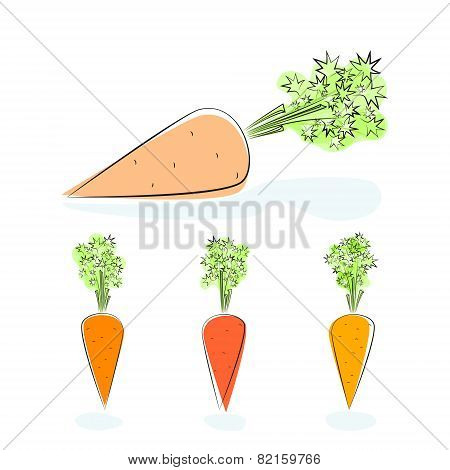 Carrot root vegetable on a white background