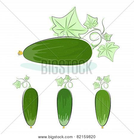 Cucumber vegetable with leaves on a white background