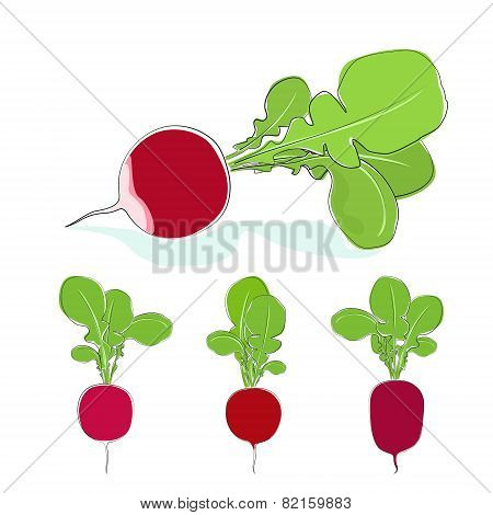 Radish vegetable with leaves on a white background