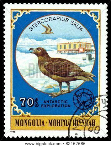 Vintage  Postage Stamp.  Stercorarius Skua.