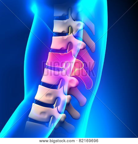 T9 Disc - Thoracic Spine Anatomy