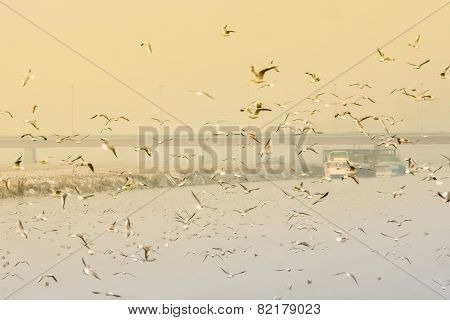Seagulls Flying Above Water