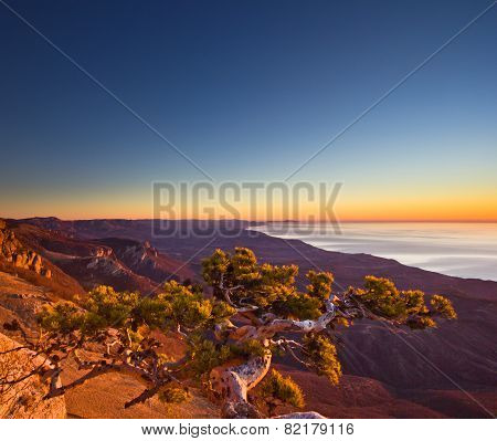 aerial view of surviving tree in mountains and sunrise above the sea