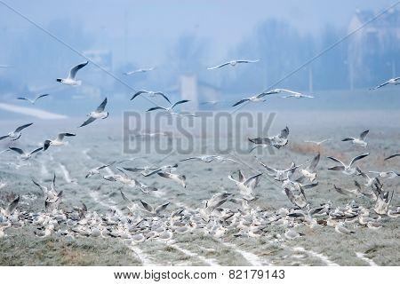 Seagulls On Field