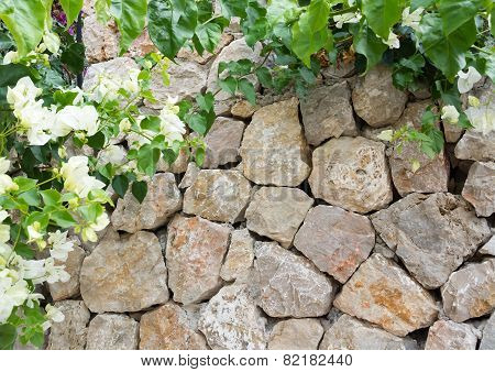 Stone Wall And White Flowers