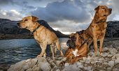 picture of dog teeth  - sunset winter picture with dogs and cuber lake in majorca - JPG