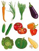stock photo of marrow  - Vector illustration of vegetables - JPG