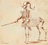 stock photo of centaur  - An hand drawn vector illustration - JPG