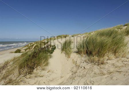 Dune Of  Stella Plage In Nord Pas De Calais