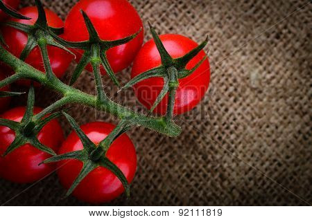 Freshly Picked Vine Tomatos