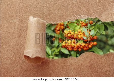 Ripped paper hole with ashberry background inside